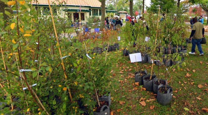 Rebuild Philadelphia Parks & Infrastructure – and Free Trees